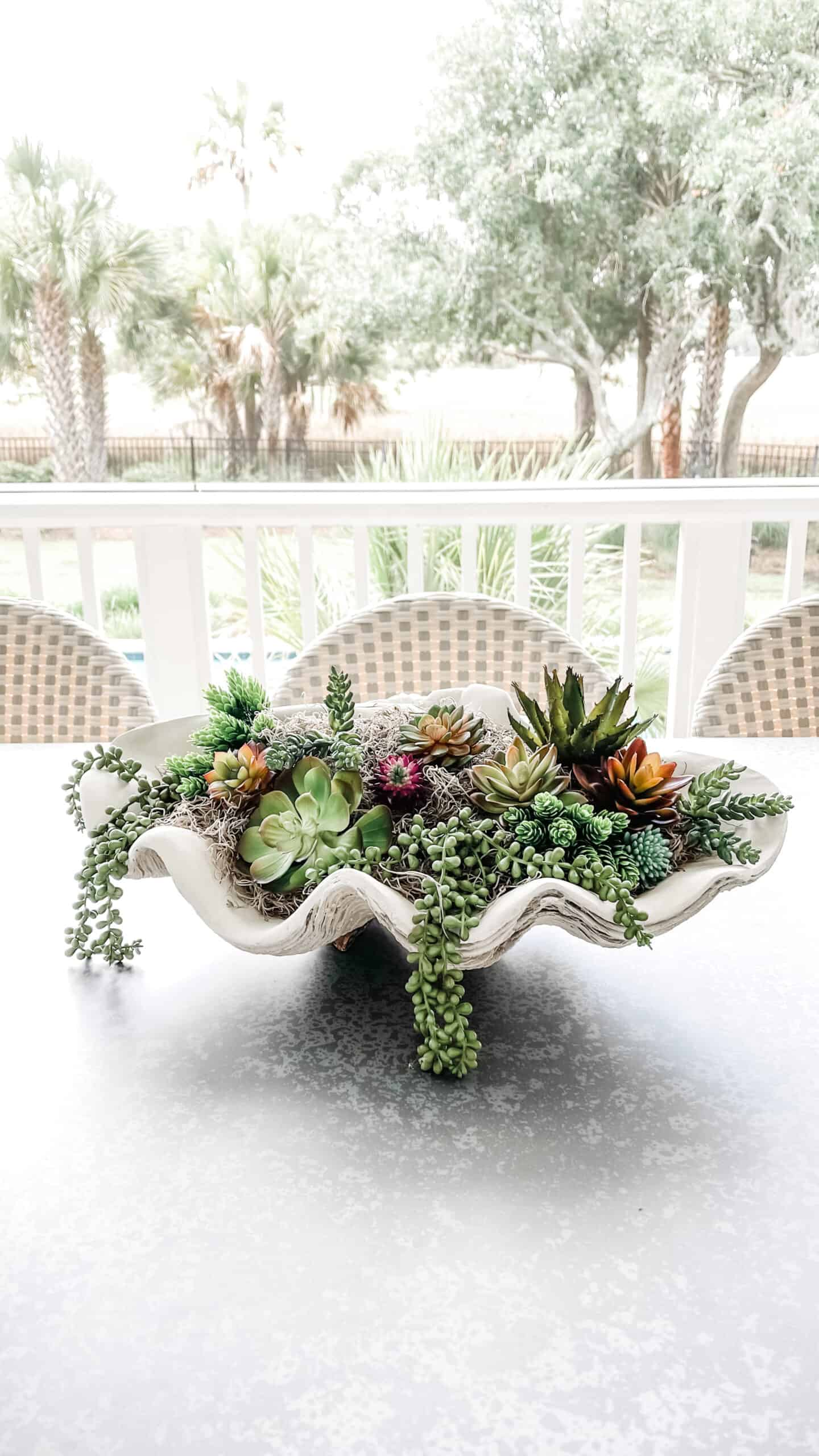 Clam shell filled with succulents as a table centerpiece.