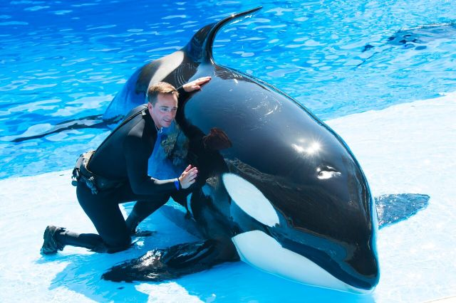 Entrenador con orca