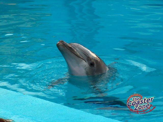 delfinsfm1