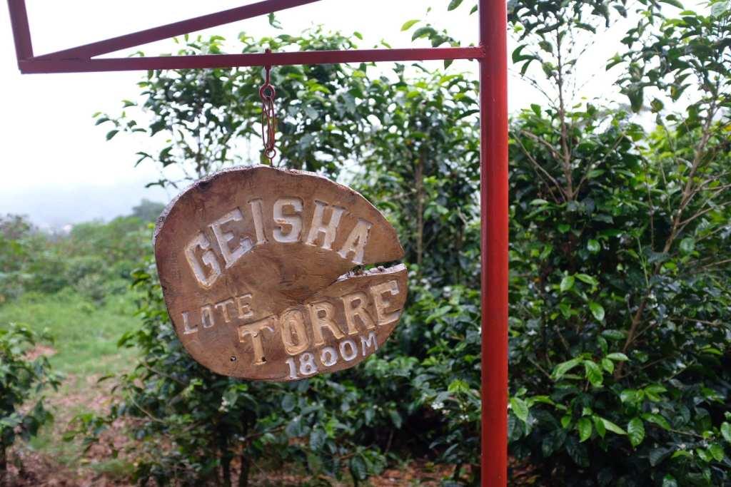 Geisha coffee