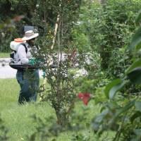 Preparing Your Lawn For Backyard Entertaining