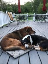 Moose and Angus