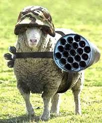 sheep attacking