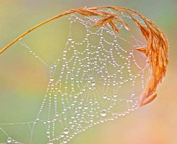 Complexity Tolerance: image of a raindrop laden cobweb