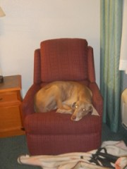 Dog in Chair - Sleeping in Hotels
