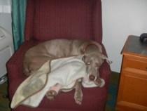 Zoe in Chair 2 - Sleeping in Hotels