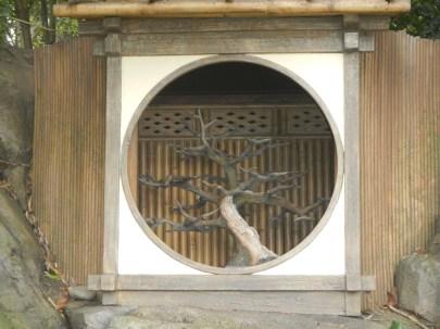 Bonsai Tree Epcot