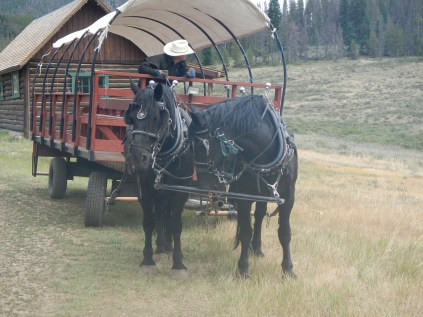 Wagon Ride Horses