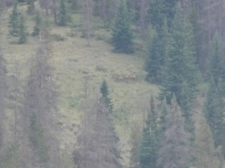 Elk on the Mountainside 2