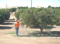 Kenin picking a Valencia Orange