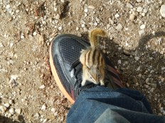 Just a chipmunk on my foot!