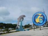 Dolphin Preserve Key West Fl