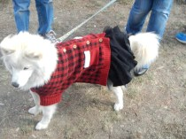Doggies in costume at Scarecrow Fest St. Charles IL 2012