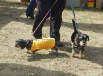 More doggies in costume at Scarecrow Fest St. Charles IL 2012