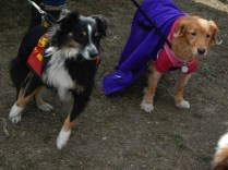 Two Doggies at Scarecrow Fest St. Charles IL 2012