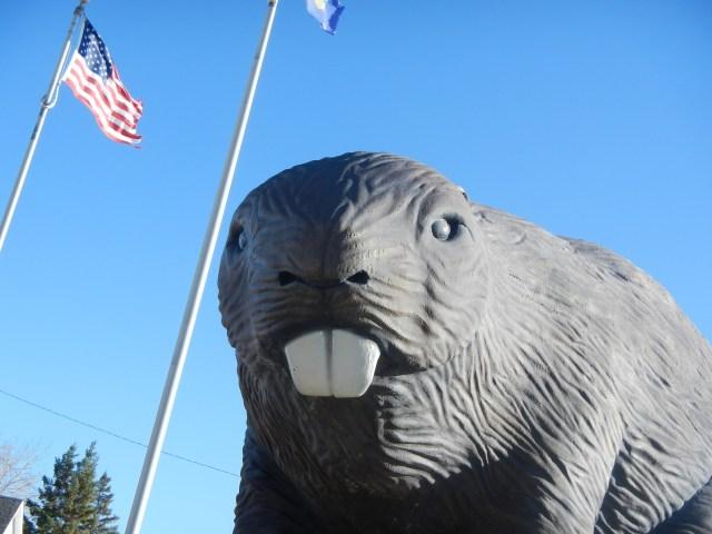 Giant Beaver Face