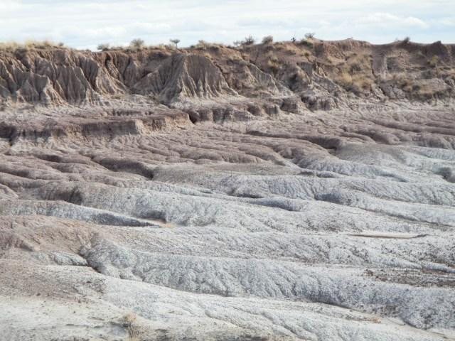 Petrified Forest Badlands