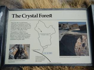 Petrified Forest Arizona 008