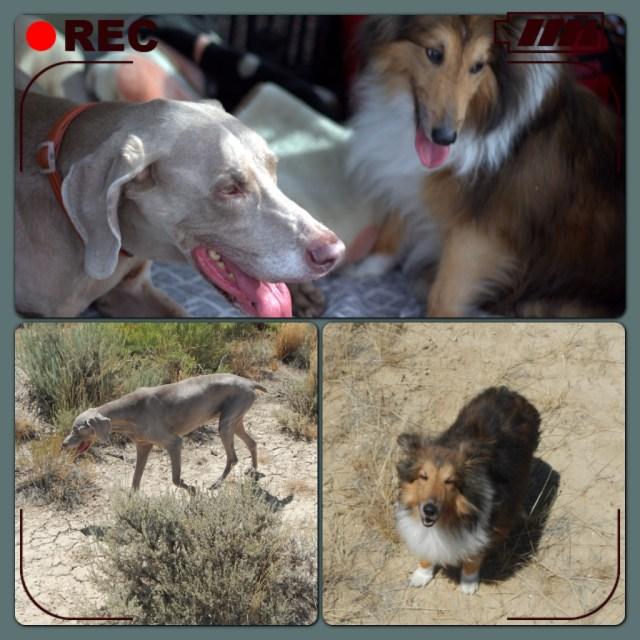 Zoe and Punkin - Dog Travel Experts