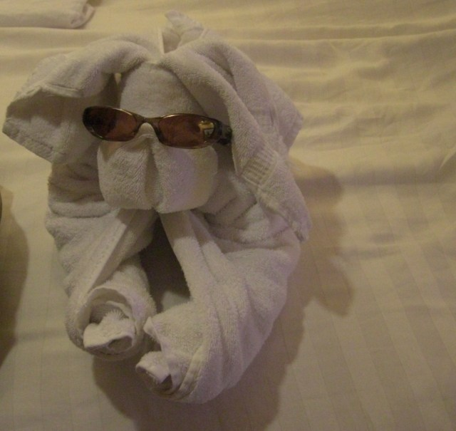 Towel doggie