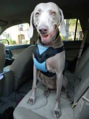 Safe Dog Travel with Bergan Pet