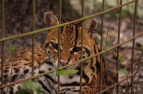 -Big Cat Rescue