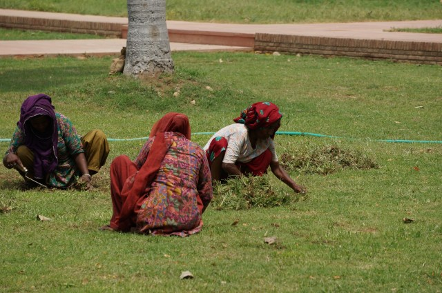 Indian women cutting the grass