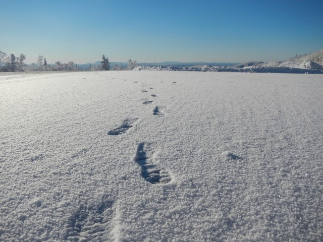 Footprints in snow