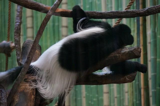 Maryland National Zoo 12