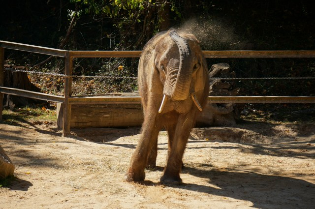Maryland Zoo Baltimore Travel Guide