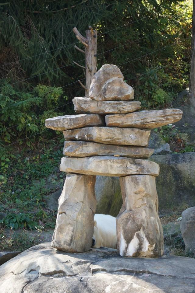 Polar Bear Hiding at the Maryland Zoo