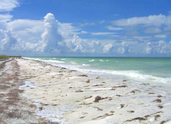 Honeymoon Island from Tampa Travel Guide
