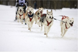 Alaskan Sled Dogs - source