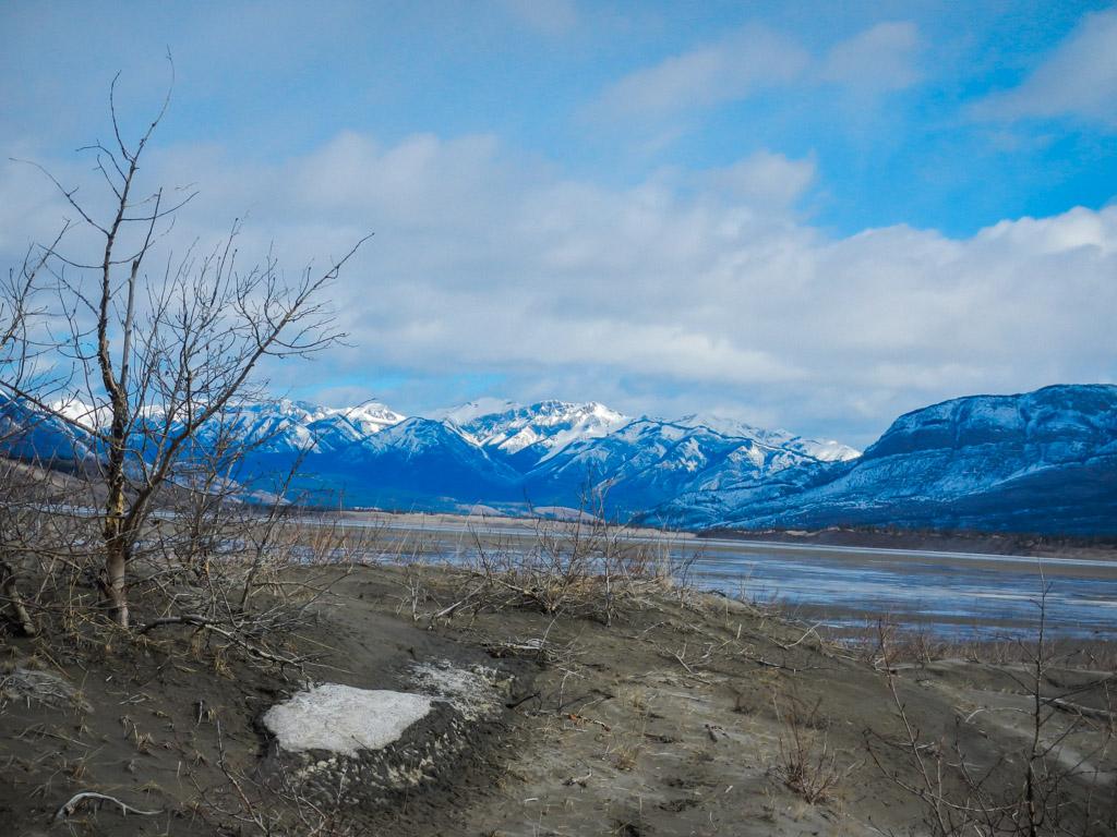 Wildlife Tour of Jasper National Park in Alberta