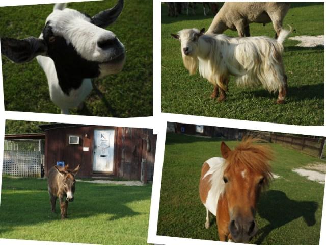 Animals on Splendor Farm