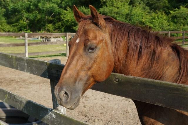 Splendor Farm Horse