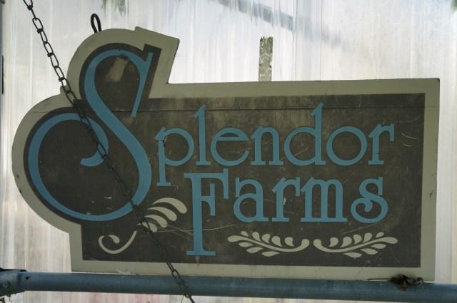 Splendor Farms B&B