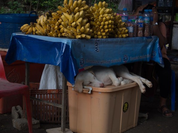 dogs and fruit