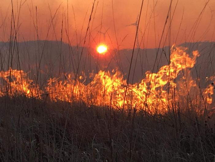 How to stop gorse fires? Change Government policy to better help UPLAND farmers