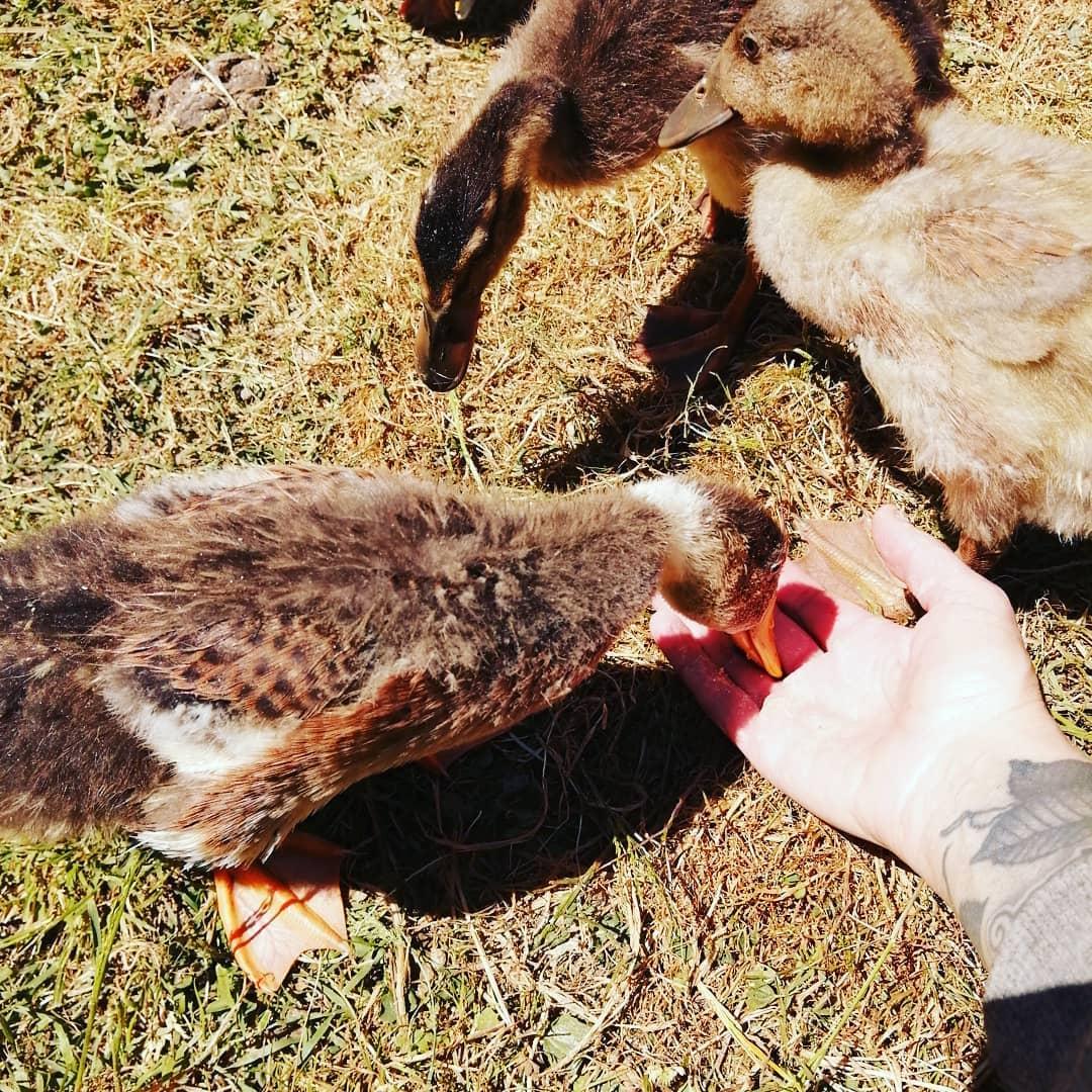 ducks & hand