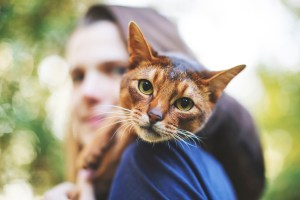 New study finds cat drugs may fight coronavirus in humans