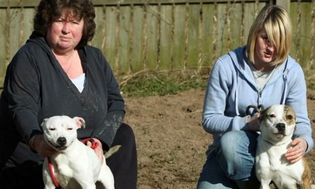 Dog Kennels In Kennoway