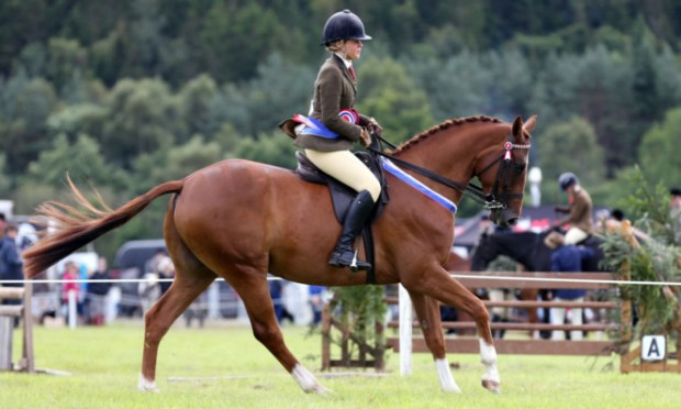 Sophie Brewster wins the Riding Horse Championship with Clifton's Promise