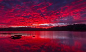 Jamie Howden's photo from Loch of the Lowes, near Dunkeld, was one of the very best.