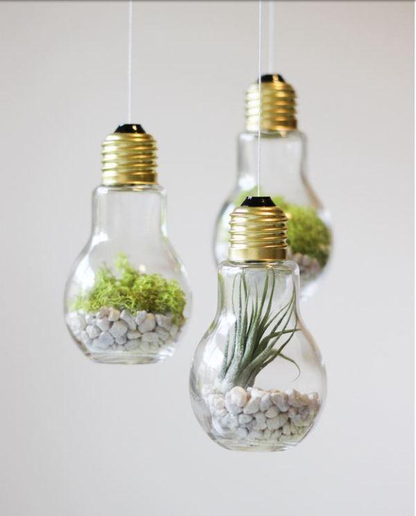bulb (13)