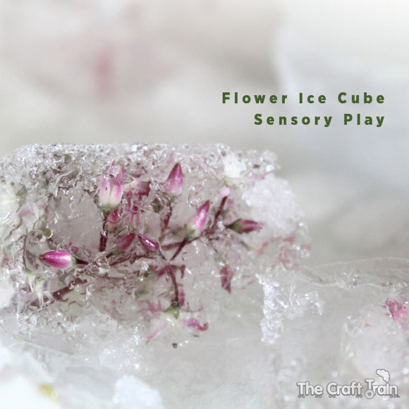 flower-ice-cubes-header