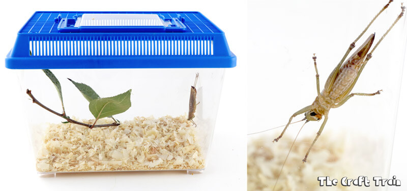 Create an insect habitat for observation