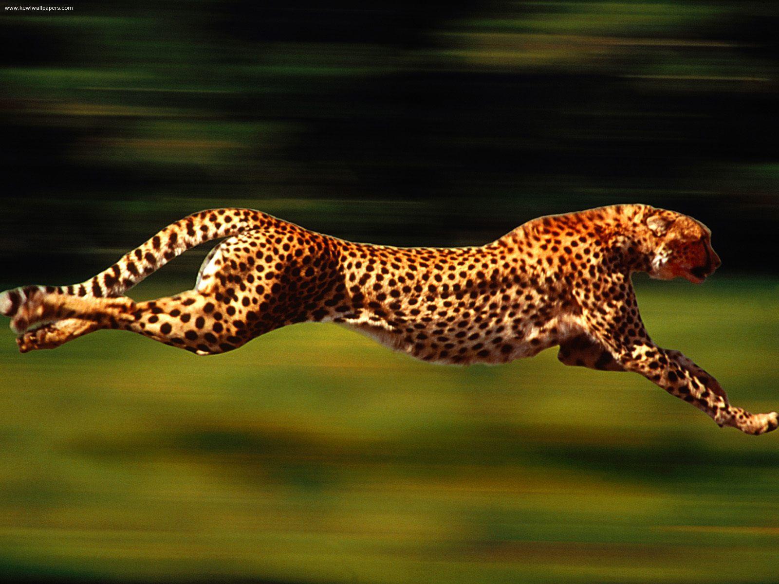 Fastest Land Animals On Earth