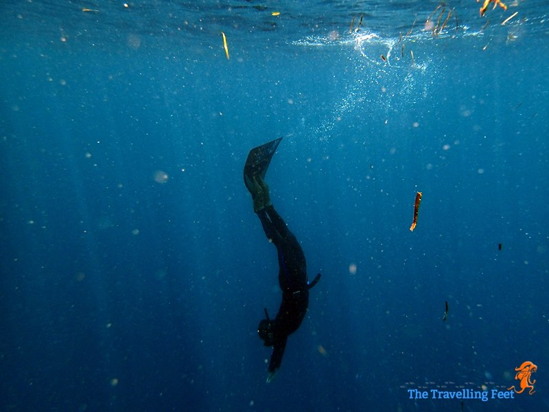 Monofin freediving