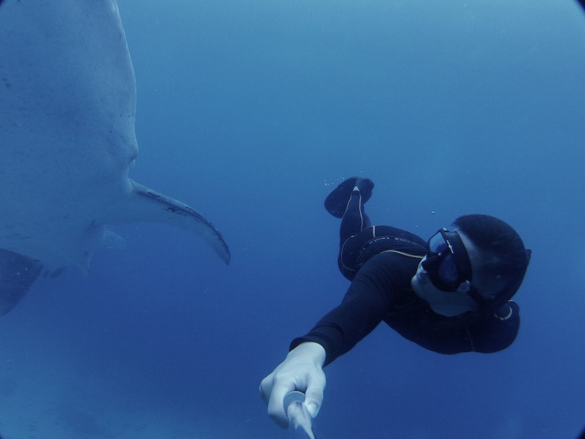 Freedive with whale shark